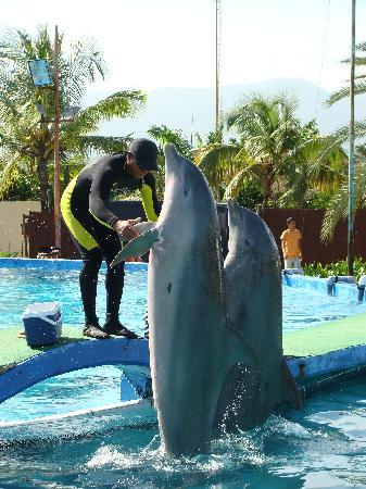 Porlamar, Venezuela: El Entrenador de los Delfines