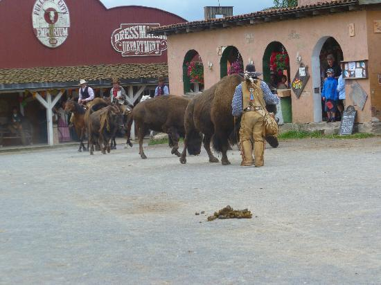 Pullman City Harz: Wild Buffalo perform as part of the Wild West Show