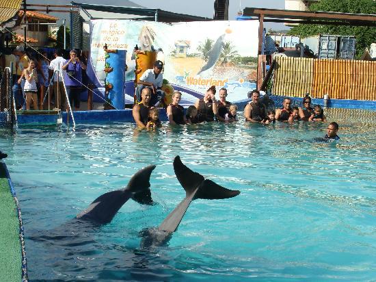 Waterland: Encuentro con Delfines