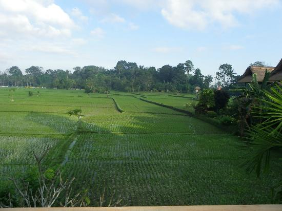 Tegal Sari: View from Balcony Room 32