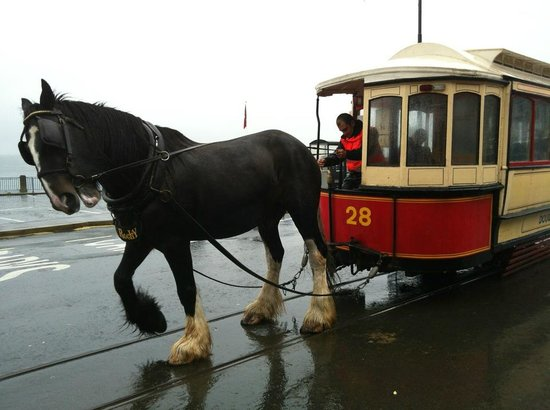 Douglas Bay Horse Tramway: Toby