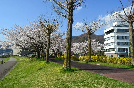 Suwa City Kohan Park: 湖畔公園の桜
