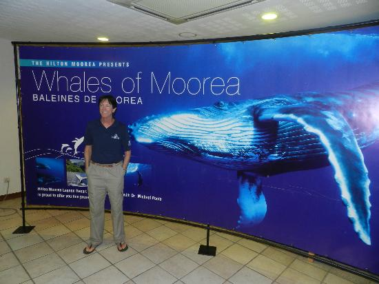 Dr. Poole's Dolphin and Whale Tour: Dr poole's seminar every Tuesdays and friday nights at 5 Pm ( HAppy Hour) at the Hilton Moorea