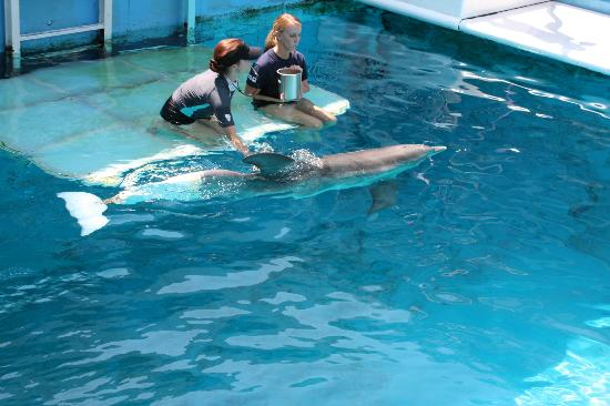 Winter The Dolphin And Staff At The Aquarium Picture Of Clearwater Marine Aquarium