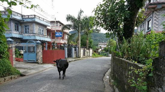Hotel Family Home: de rustige straat van het hotel