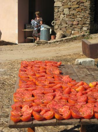 Agriturismo L' Aquila: Sun dried tomatoes