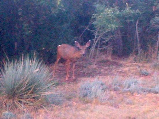 Hughes Hacienda Bed & Breakfast: An evening visitor