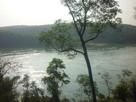 Iguazu Forest: vista en la caminata