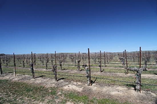 J. Lohr Vineyards and Wines: The vineyards in March