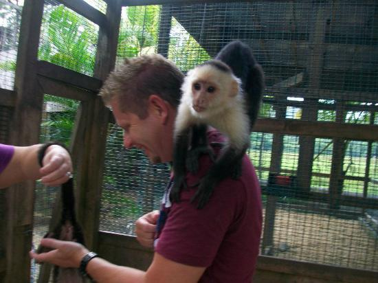 Bodden Tours: Monkeying arround