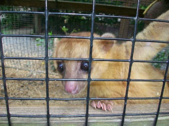 Bodden Tours: Lemur