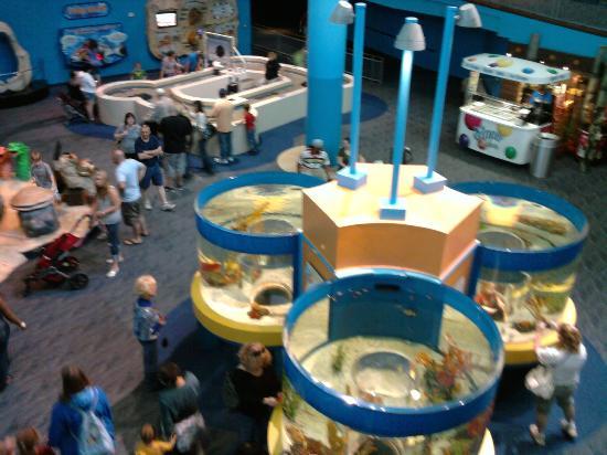 Ripley Aquarium Tennessee