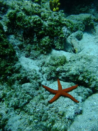 Aquaholics Dive Centre: Starfish on one of the dive sites