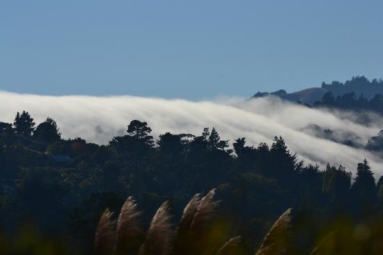 Acqua Hotel Mill Valley: Fog rolling over the hills.