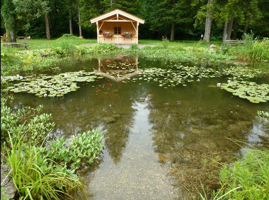 Batznhausl: Koi pond see the fish in foreground