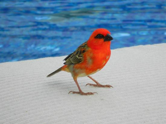 Long Beach Mauritius: Little friend by the pool