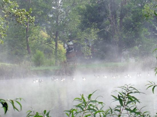Lake Eden Events & Lodging: Geese in early morning fog on Lake Eden