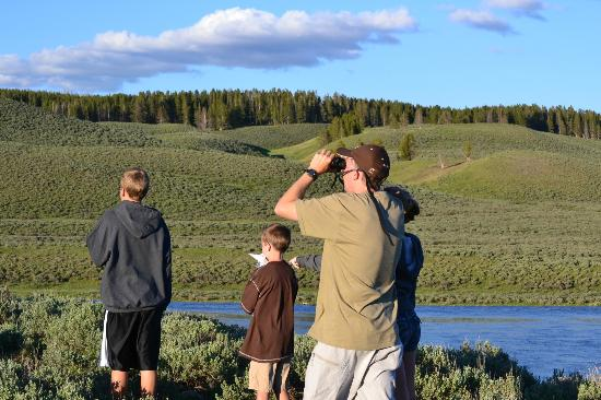 Lamar Valley: Watching wolves chase elk herd