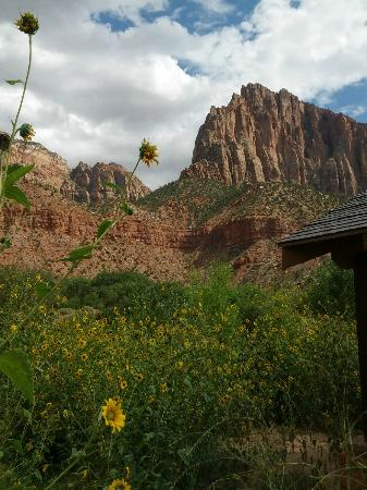 Watchman Campground: View near restroom