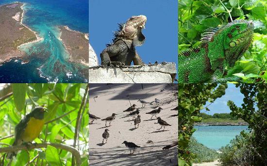 Sainte-Anne, Guadeloupe: réserve naturelle de Petite terre
