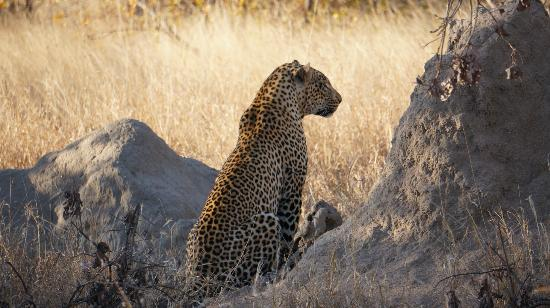 Pondoro Game Lodge: Leopard on Game Drive (photo by s.needles