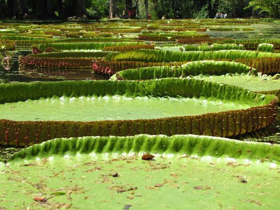 SSR Botanic Garden: fleurs