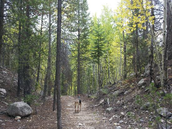 Winter Park Mountain Lodge: This pet-friendly trail behind our hotel connects to the Bonfils trail system and Resort