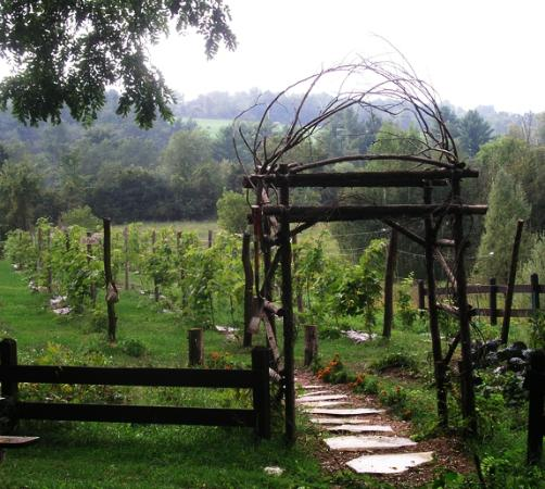 The Inn at Neshobe River: Onsite Vineyard