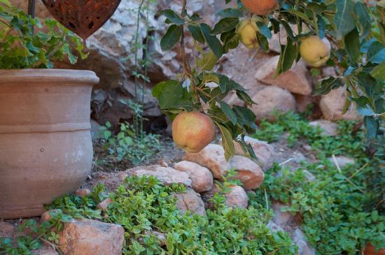 Chez Pierre : L'abero delle mele