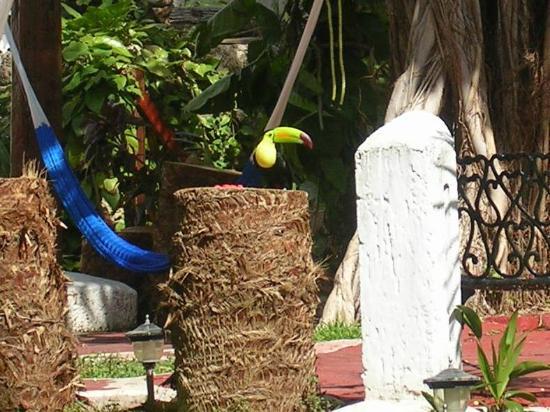 Eco-Hotel El Rey Del Caribe: Tucan Visitante 1