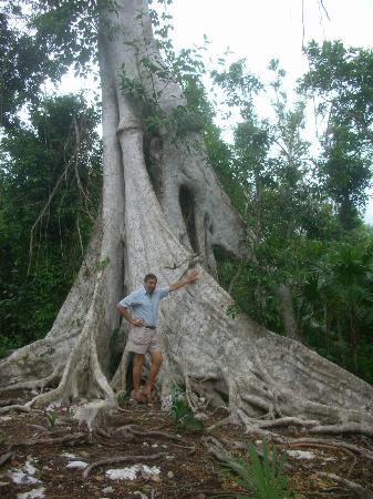 Eco-Hotel El Rey Del Caribe: Cenotes 7