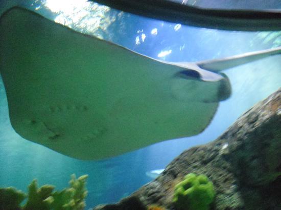 Sealife Aquarium Star Fish Foto De Sea Life Kansas City