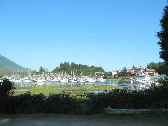 Ucluelet Campground: View from the campground