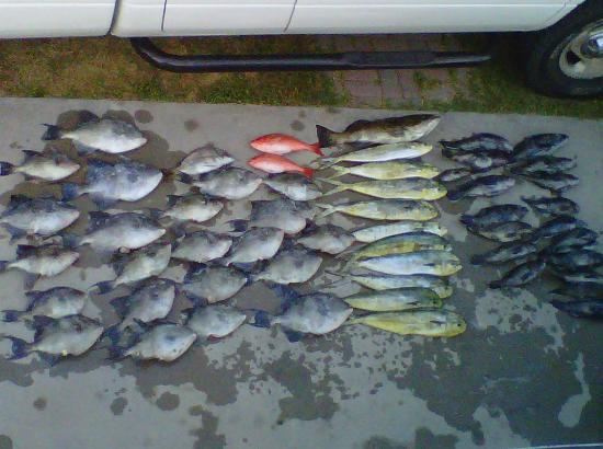 Mount Maker Charters : Bottom Fish Buffet! Trigger, Vermelion Snapper, Black Bass and Mahi!