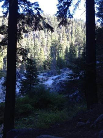 Lodgepole Campground: the view from #128