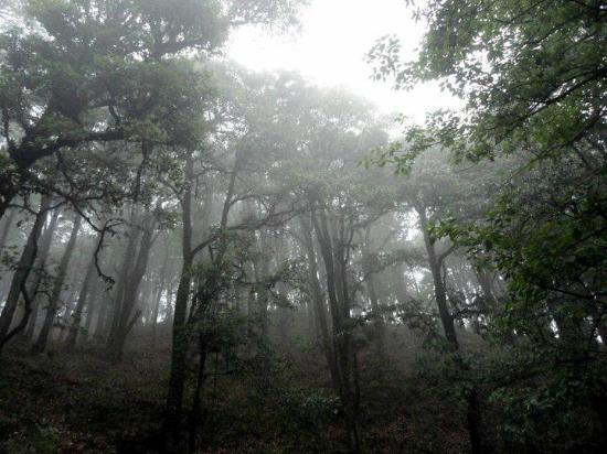 Ashoka's Naini Chalet Resort: nearby forest