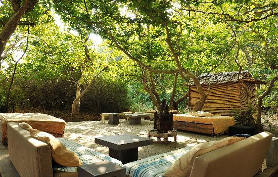 Onar: CHILL OUT UNDER THE PLANE TREES