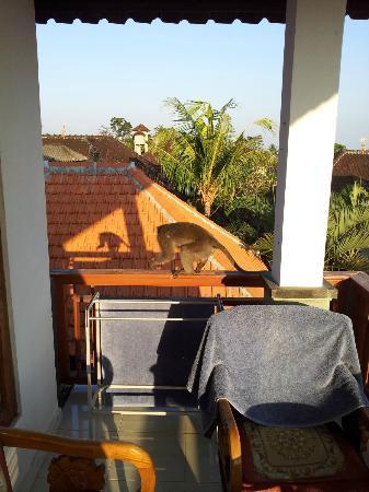 Warsa Garden Bungalows: Moneky visit