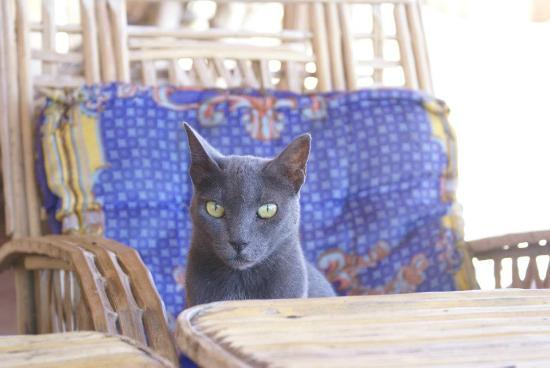 Sindbad Camp: One of our cats; Patiently waiting for the right picture to be taken
