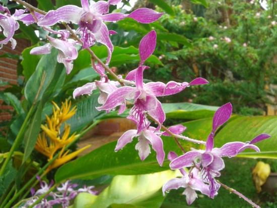 Green View Village Resort: Orchids after the rain