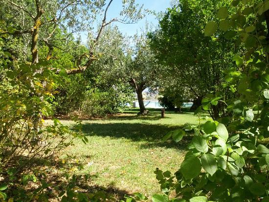 فيلا سيكولينا: Piscina tra gli olivi 