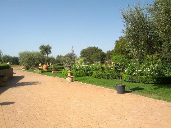 Sovana Hotel & Resort: Giardino con roseti ed uliveto che circonda l'hotel