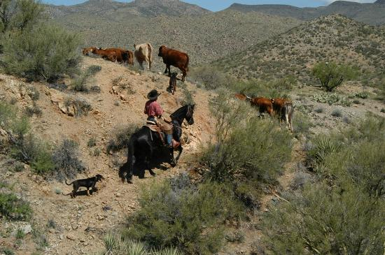 Williams Family Ranch: Cattle Work