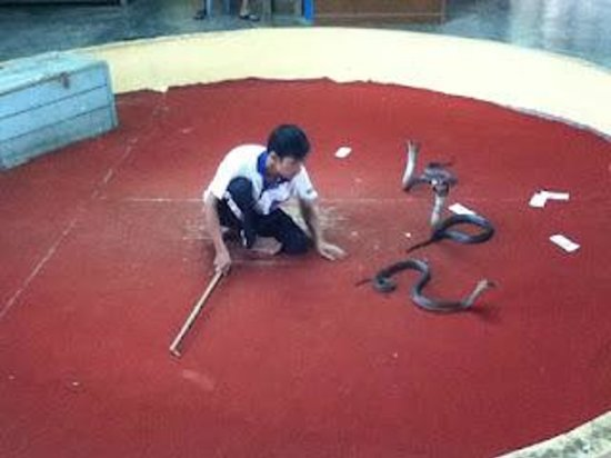 the snake keeper showing their skill