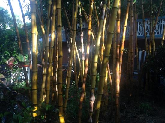 Wakulla Suites: Bamboo in the garden.