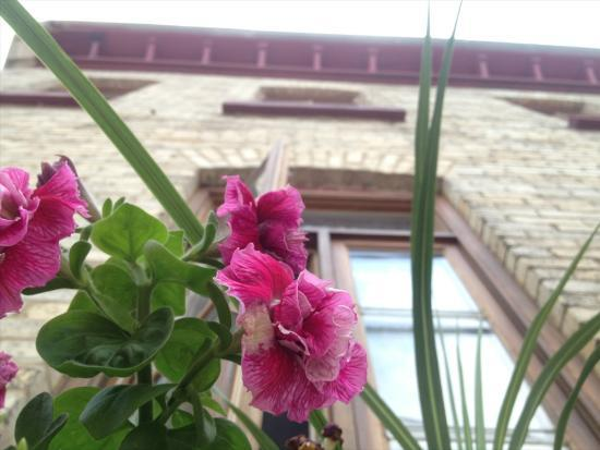 بي آند بي أوه بيتي روا: Flower Box and upwards view of the B&B 