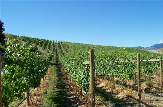 Howling Bluff Estate Winery : Summa Quies Vineyard, Pinot Noir