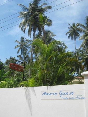 Amara Guest
