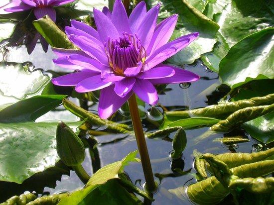 Botanischer Garten Goettingen 2019 All You Need To Know Before