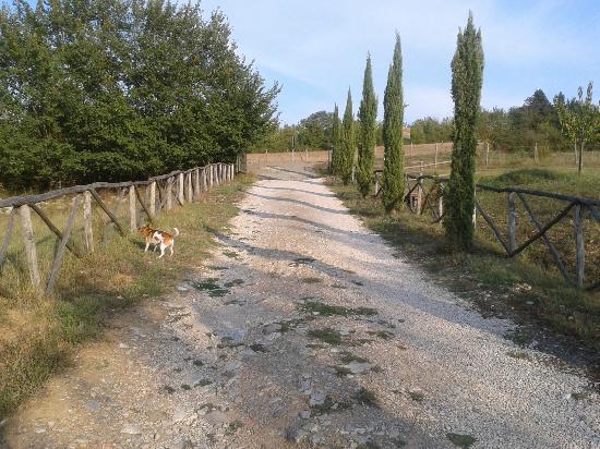 Villa Martis: Agriturismo